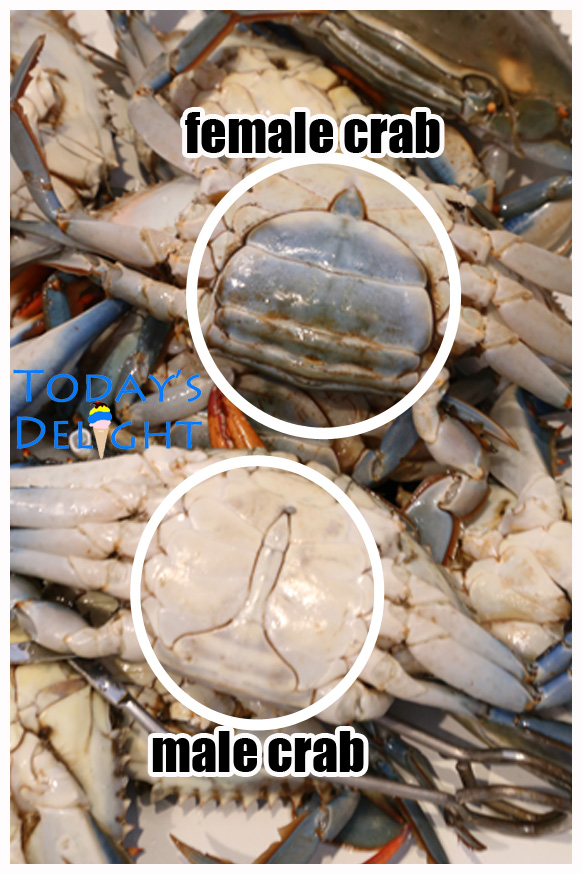 male blue crab male and female blue crab is Today's Delight
