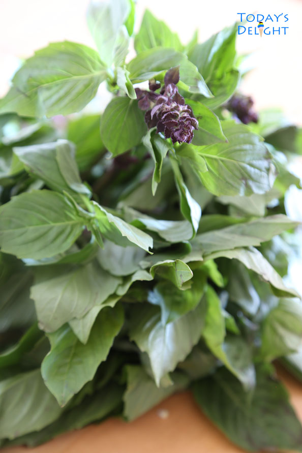 Thai basil leaves is Today's Delight